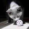 cat saint