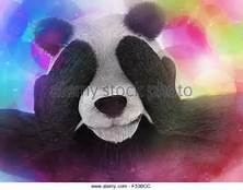 panda.jpg.f70005908f74d8928f042db338c87fe9.jpg